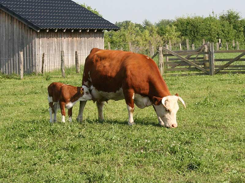 Bauernhoferlebnis